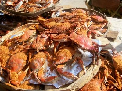 Baltimore Crab Feast David Tours