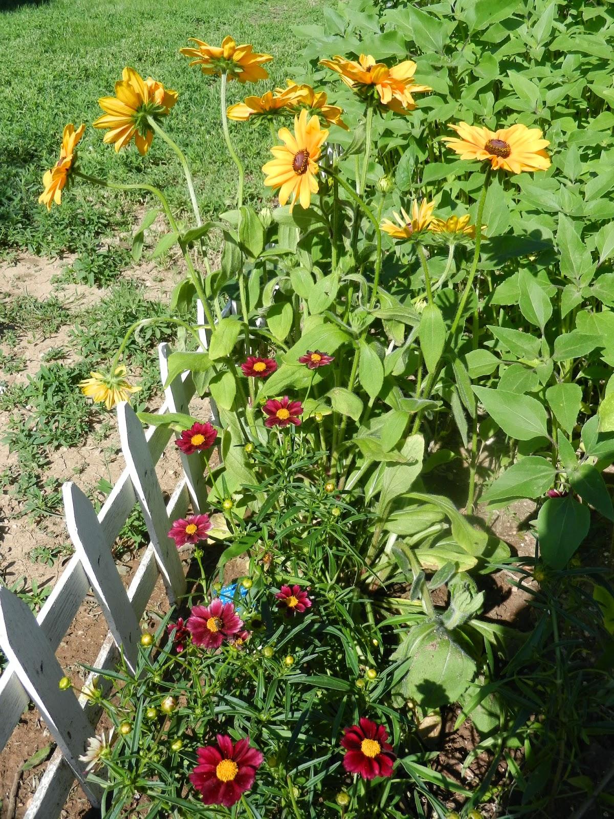 summer/fall garden flowers