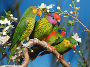 To save this wallpaper rightclick the mouse to the wallpaper and then . (beautiful colorful cute birds wallpaper)