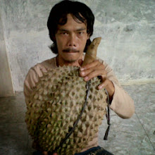 Durian Bawor  -  Bibit Durian