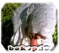 bokepdo