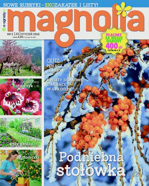 Magnolia Nr1 (45) STYCZEŃ 2016