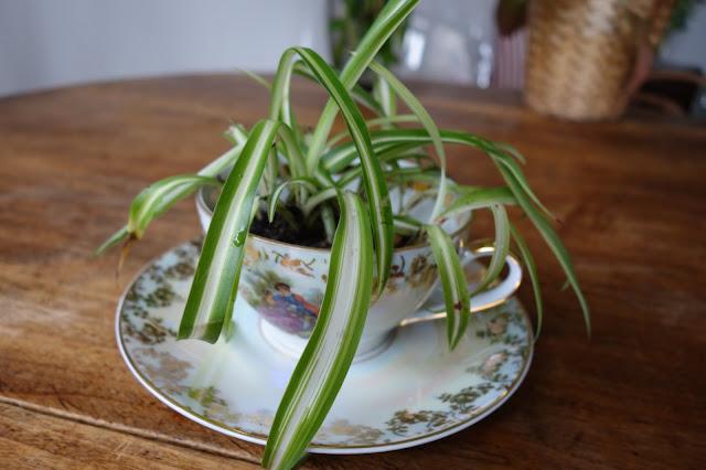pot-de-fleurs-dans-tasse-DIY
