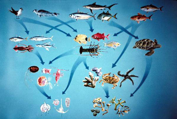 Marine Ecosystem Food Web from