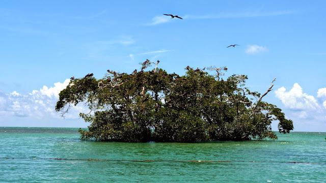 Isla de Pájaros, Punta Allen