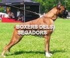 Boxers dels Segadors