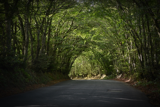 creepy cool pathway trees narrow road britain