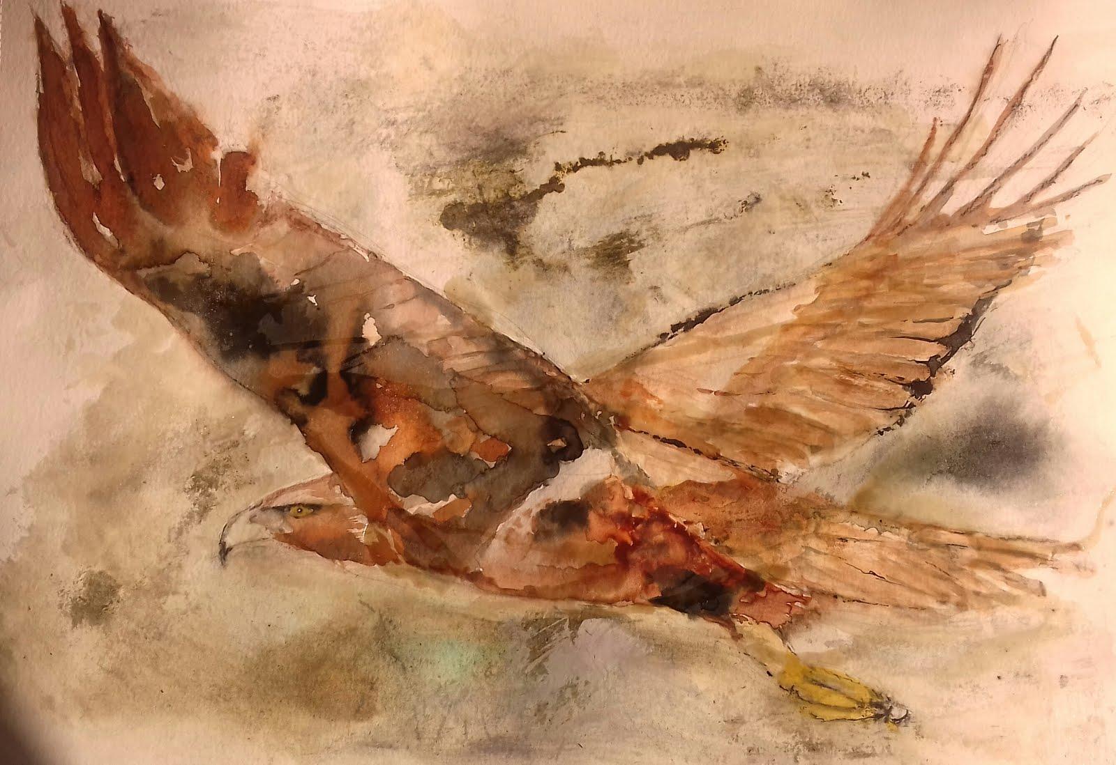 Águila real en el Somontano