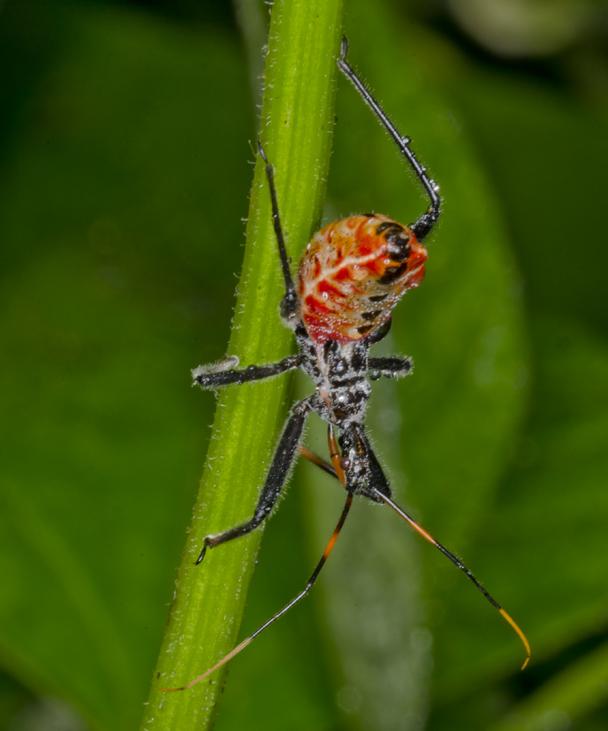 day tripper garden bugs