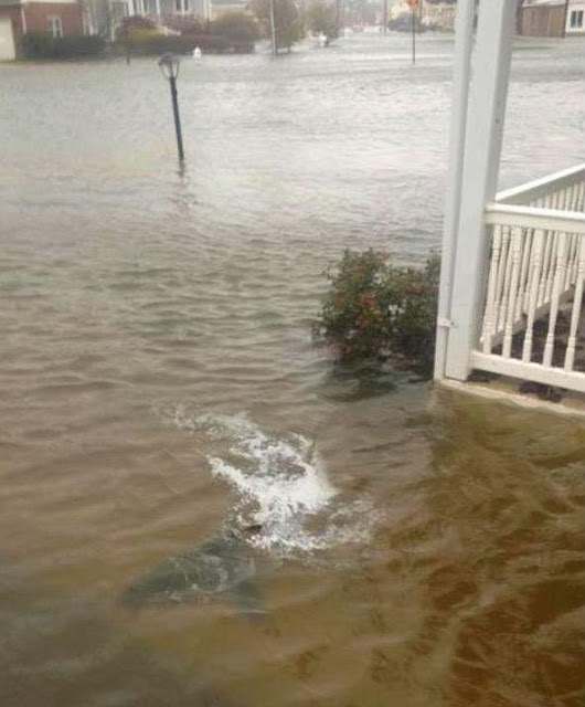 http://silentobserver68.blogspot.com/2012/10/squali-nuotano-tra-le-strade-allagate.html