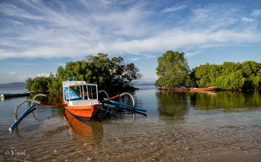 la mangrove à Lembongan