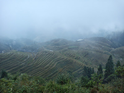 rizière aux terrasse à Longji