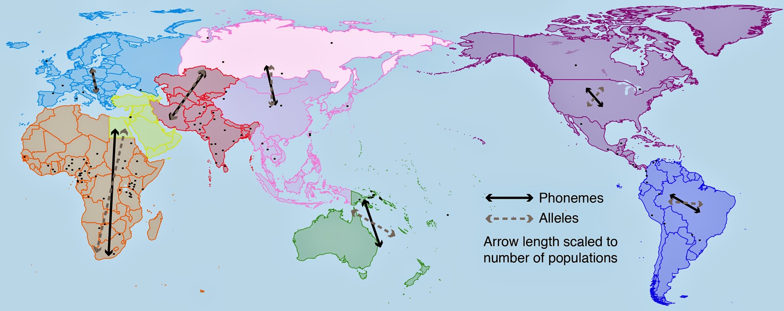 Human dispersal and the evolution of languages show strong link