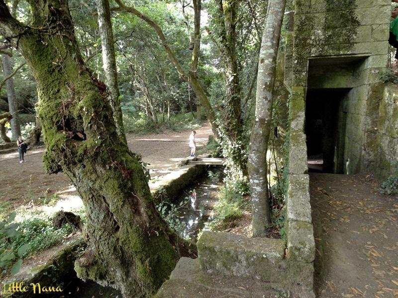 plan con ninos castillo medieval bosque encantado