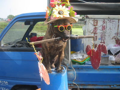 dog on bucket in Taiwan