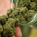 El Gobierno de México autoriza a cultivar y fumar marihuana con fines recreativos