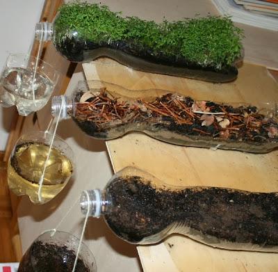http://www.lapappadolce.net/62-esperimenti-scientifici-limportanza-del-verde/