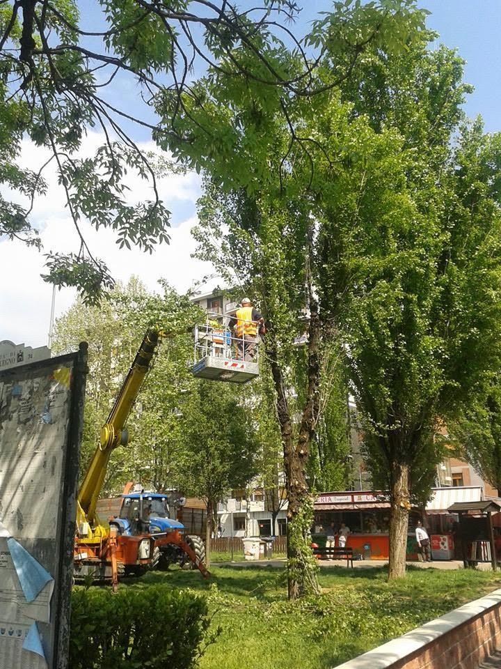 Comitato di quartiere borgata paradiso iniziati i lavori for Corso progettazione giardini