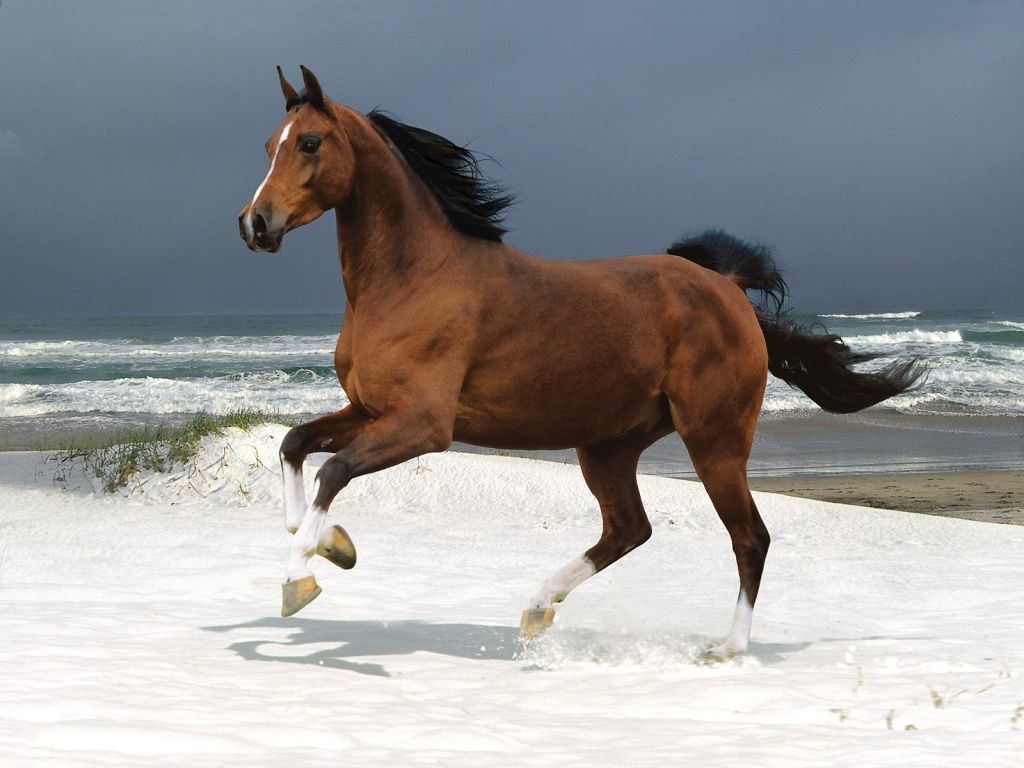 Pictures Blog: Beautiful Horses Running on The Beach - photo#5