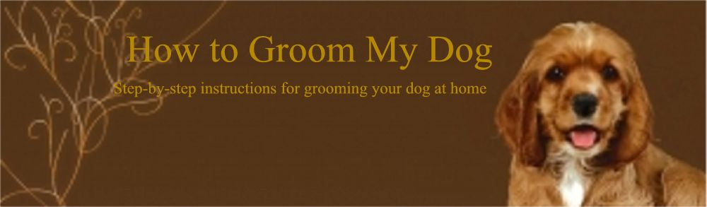 How to Groom My Dog