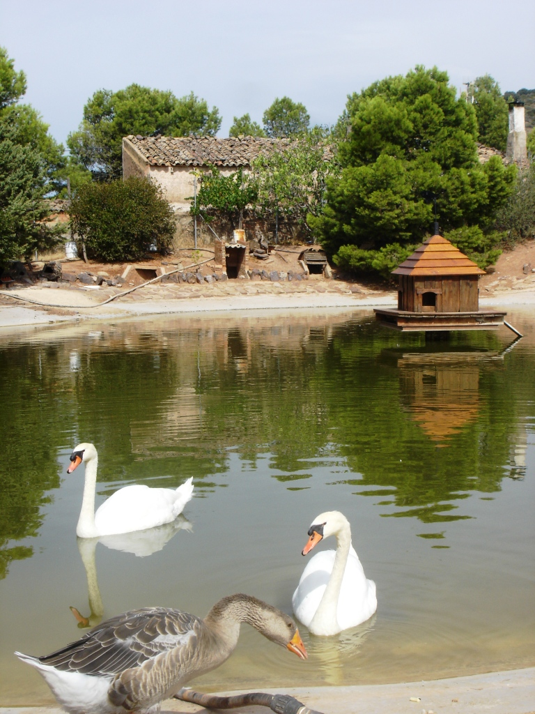 Rodanas los patos de rodanas for Estanques para patos prefabricados
