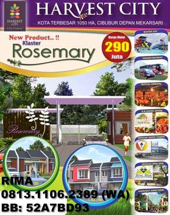 Klaster Rosemary