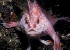 rare walking fish species