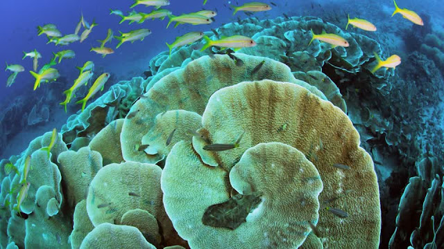 Sea life in Kimbe Bay, Papua New Guinea