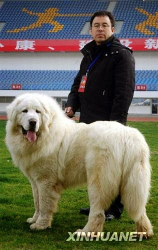 Top 5 Most Expensive Dog Breeds Of World