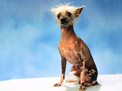Most Ugliest Dogs in the World Seen On www.coolpicturegallery.us