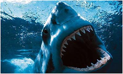 Shark-Night-3D.jpg