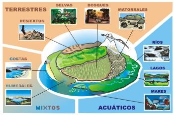 Biologia iv daniela acosta practica de ecosistemas for Como hacer una laguna artificial