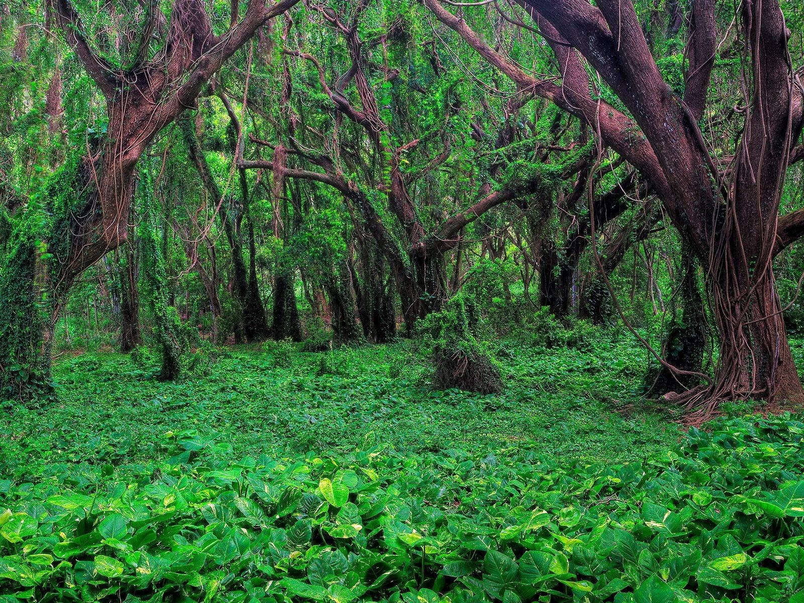 http://4.bp.blogspot.com/-CG5Oe1NvlCU/TtEPAADMKqI/AAAAAAAAXGI/LeRYUAFrByI/s1600/Natural+Photography+%252822%2529.jpg