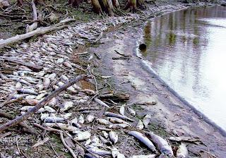 Catastrophe écologique sur un grand fleuve du Maroc (vidéo)