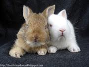 Two funny bunny. Two funny bunny. Cute bunny.