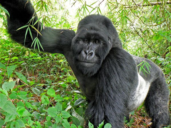 real jungle animals | My HD Animals