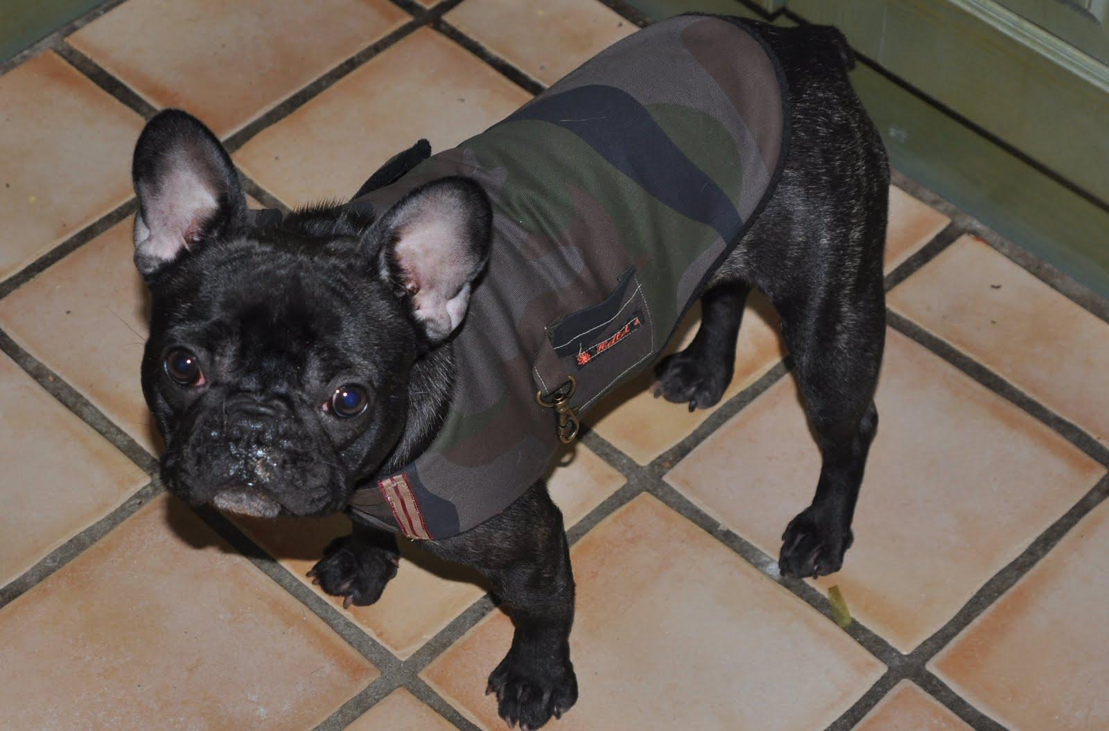bulldog tøj