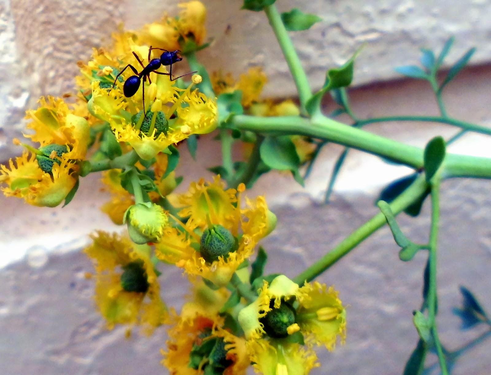 Insectos Hormigas