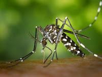 9 Cara Mengobati Penyakit Malaria