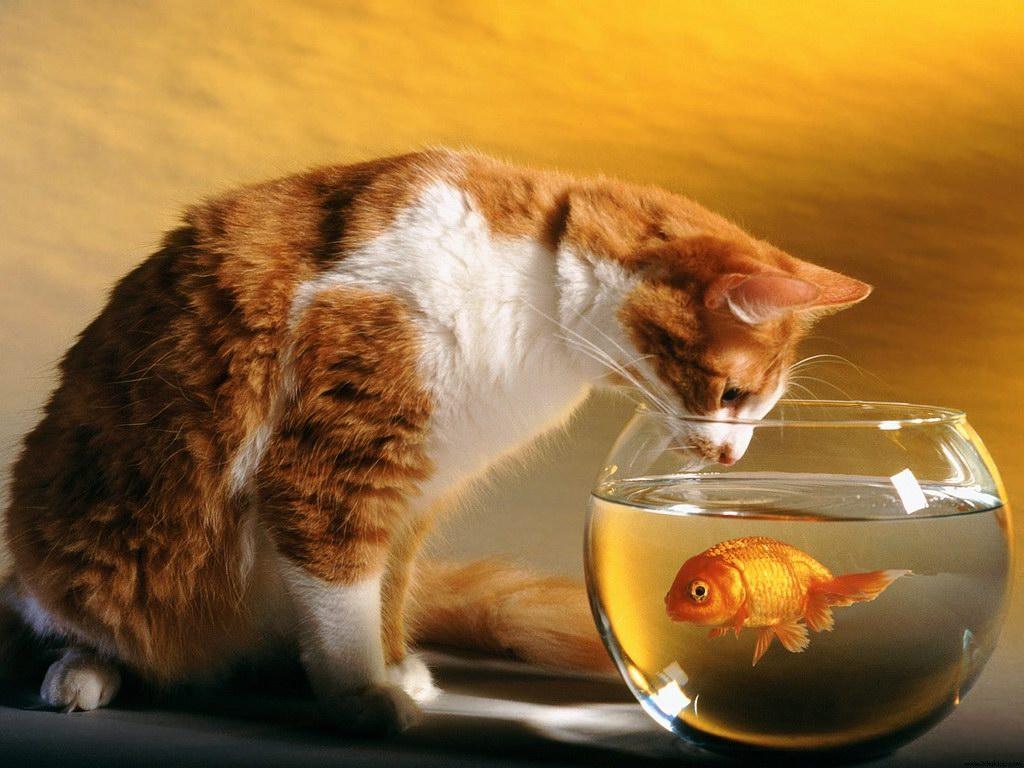 http://4.bp.blogspot.com/-CHCl6EBG2lE/T5Ka1JVaw1I/AAAAAAAAATI/CxPNuoQJbNo/s1600/Free-Cat-Wallpapers-5.jpg