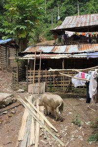 Nậm Pục village in Mường Tè