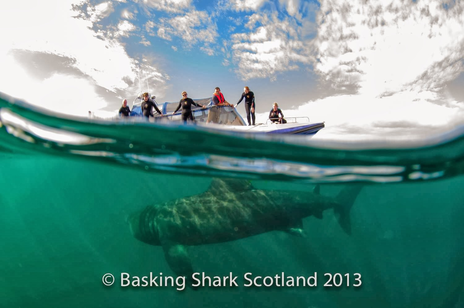 Swimming with Basking Sharks in Scotland