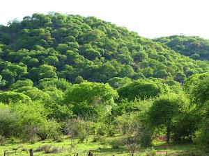 Groen boomryke heuwels by Tsumeb