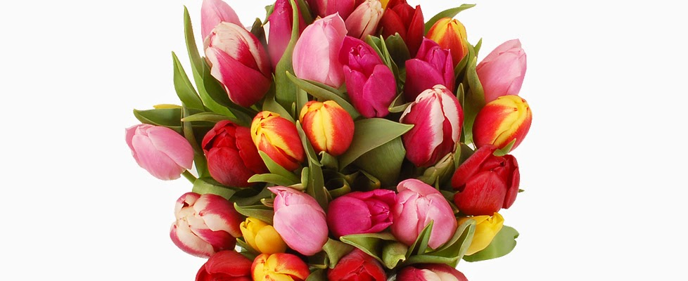 30 Mixed Tulips flowers