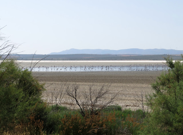Laguna de Fuente di Piedra