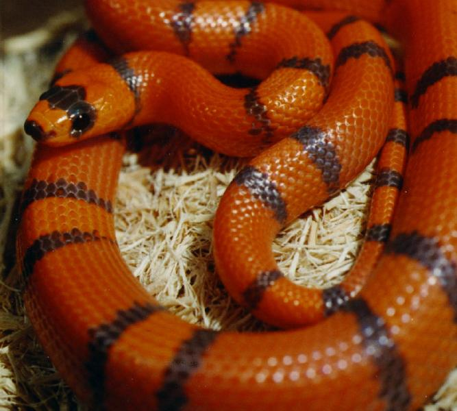 Snake Food And Habitat: