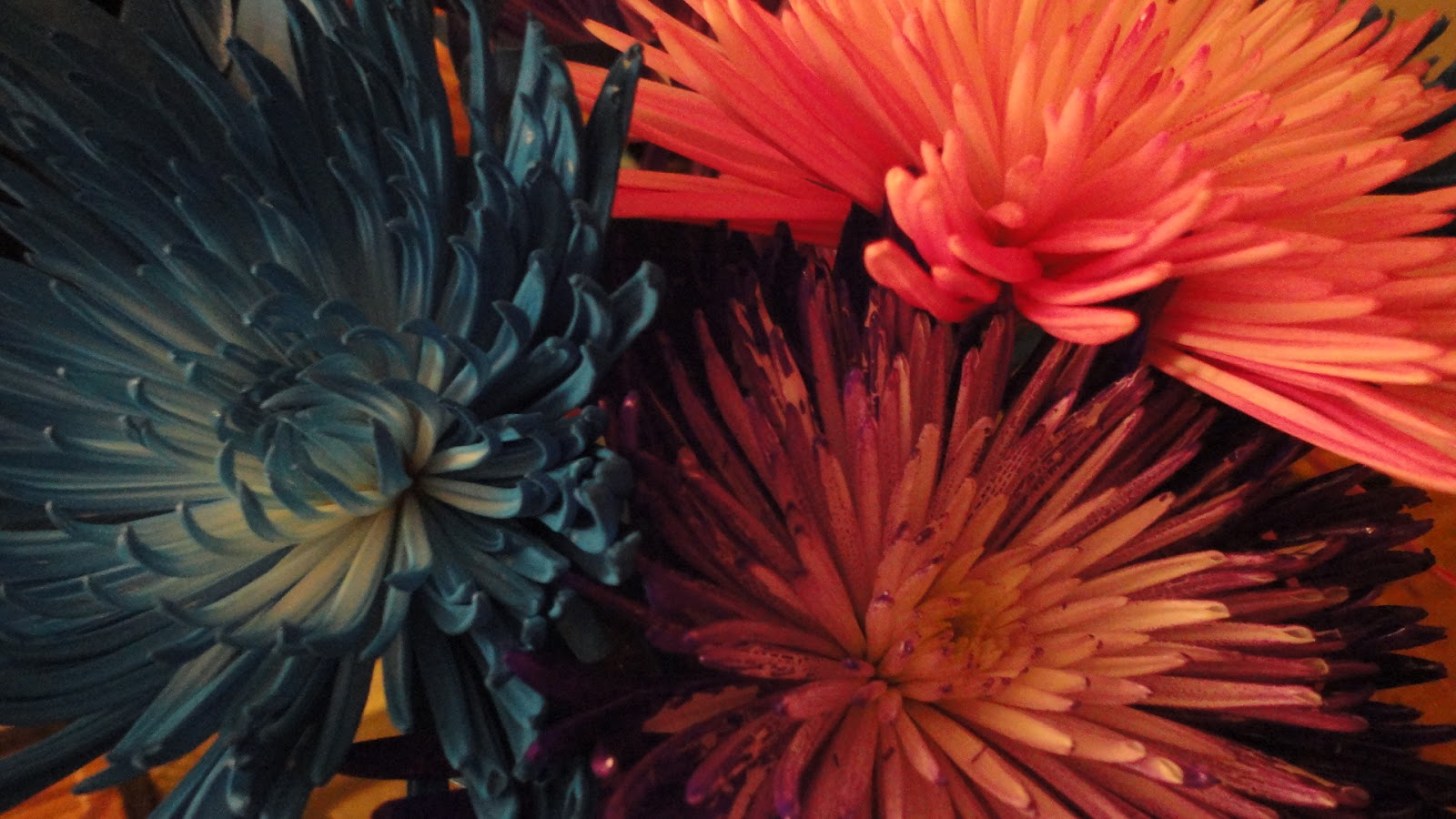 Try It With Carmella*: Flowers of a Different Color