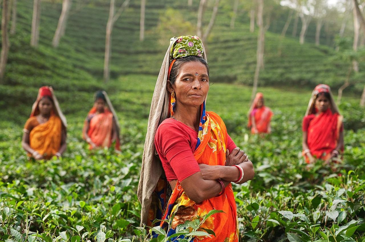 co powinieneś wiedzieć o herbacie