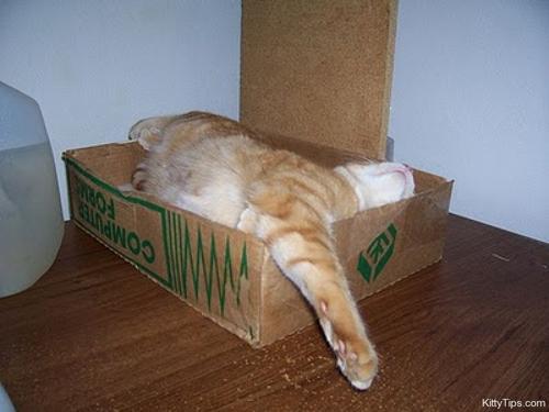 Funny Cats - Photography Pics