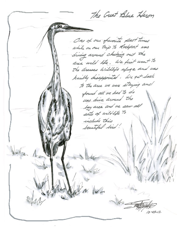 sbwatercolors and sketching Great Blue Heron
